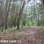 松茸狩りができる松林