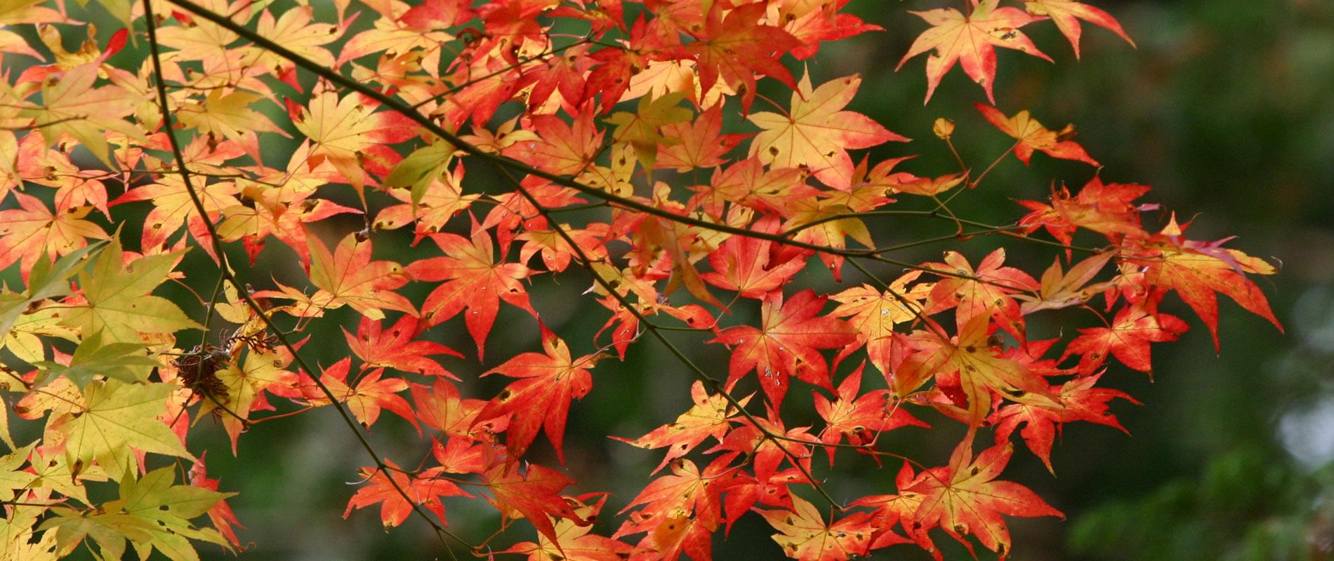 信州上田の秋の味覚